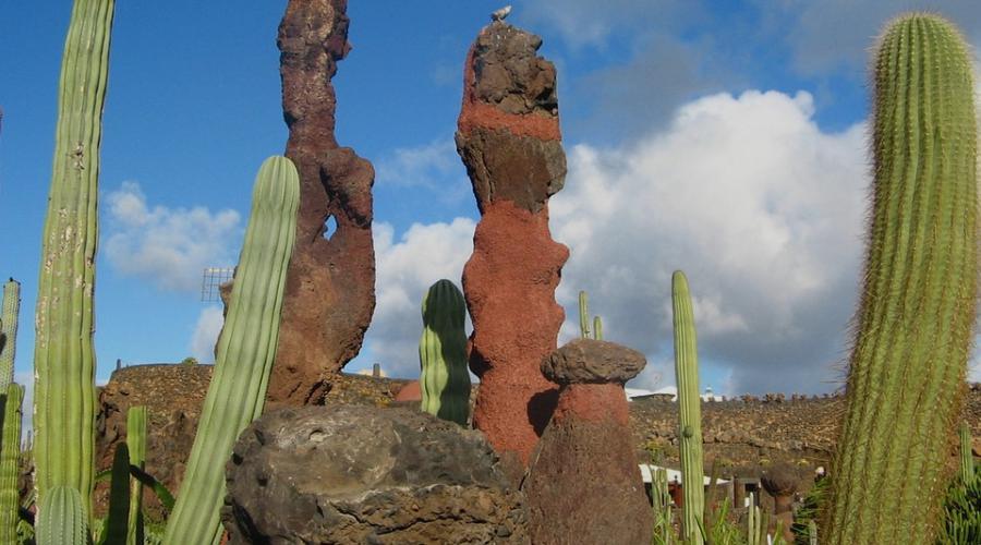 cactussen - Lanzarotter