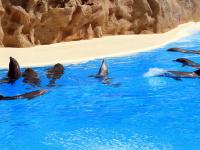 dolfijnen - Tenerife -