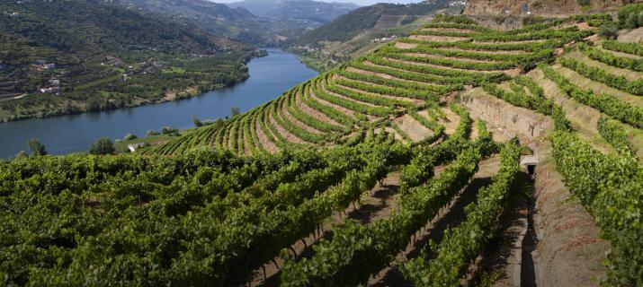 Porto wijn - wijnstreek Noord Portugal - Boottocht